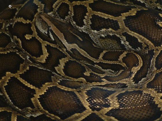 Photo of Pchełki Python: zaprzeczenie pętli