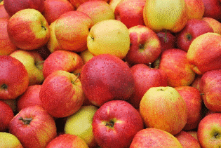 Photo of My tu gadu gadu, a chłop jabłka rwie