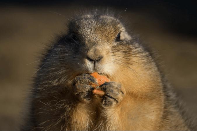 Photo of Jeść albo nie jeść: zagadka