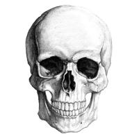 Photo of Mortuum transeunte