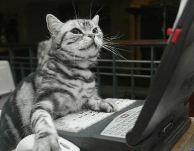 Koci hakier